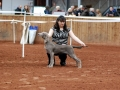 Faith WA champ show Reserve under Patsy Hollings.jpg
