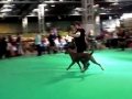Faiths first crufts on the move