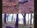 Rhea hunting soft 120513