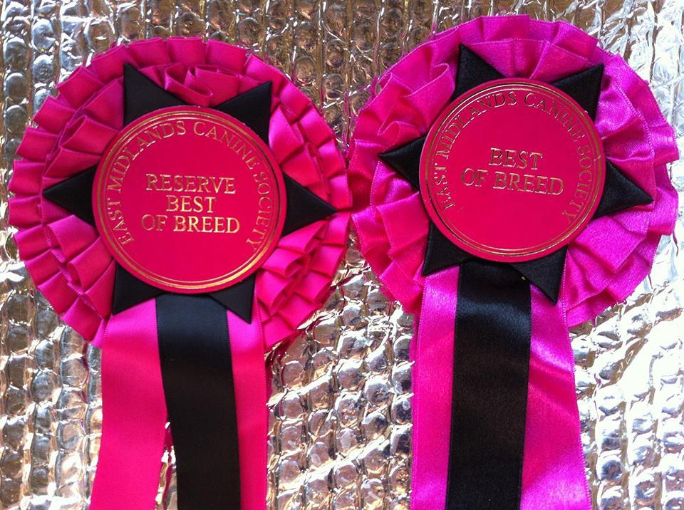 RHEA BOB & KODI RBOB!! – Astraios Longhaireds do the double at East Midlands Canine Society Open Show (Cambs)!