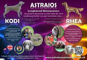 Astraios Charmed Litter Ad