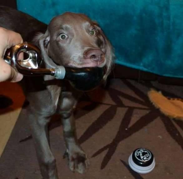 Novice Trick Dog Title – Faith