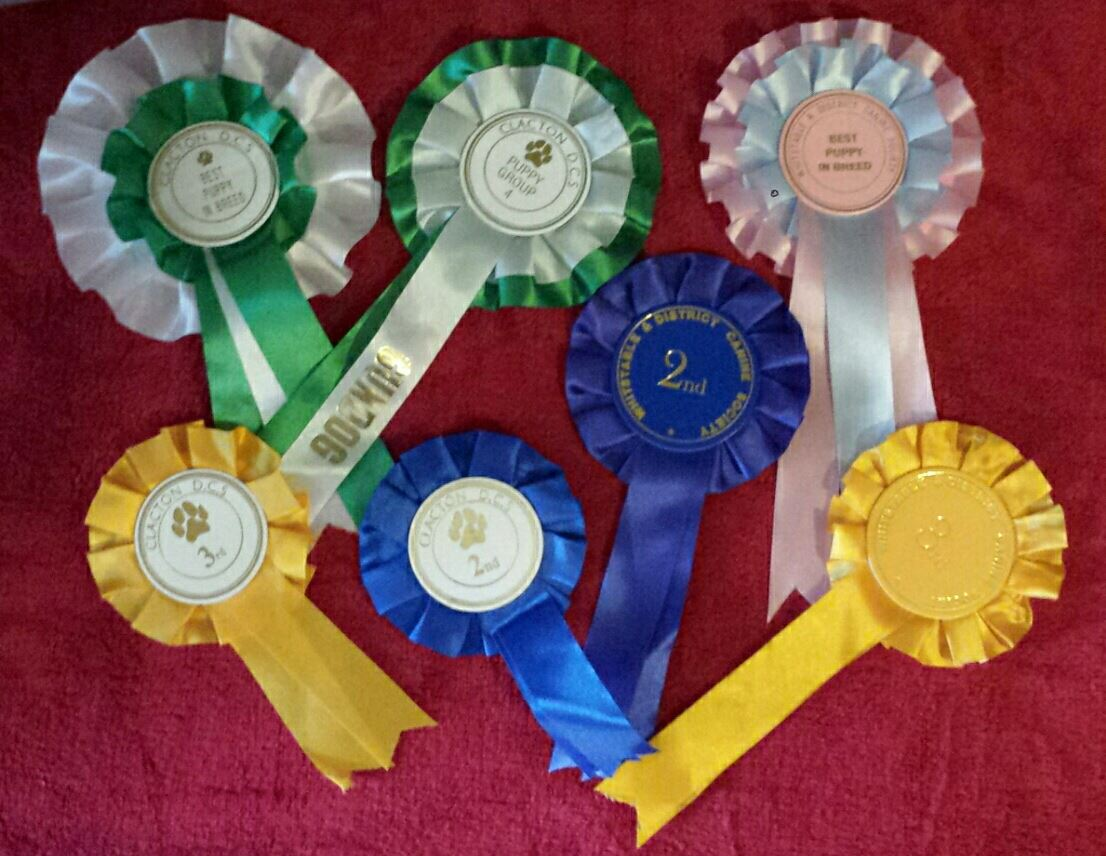 Whistable & District Canine Society Open Show (Kent)