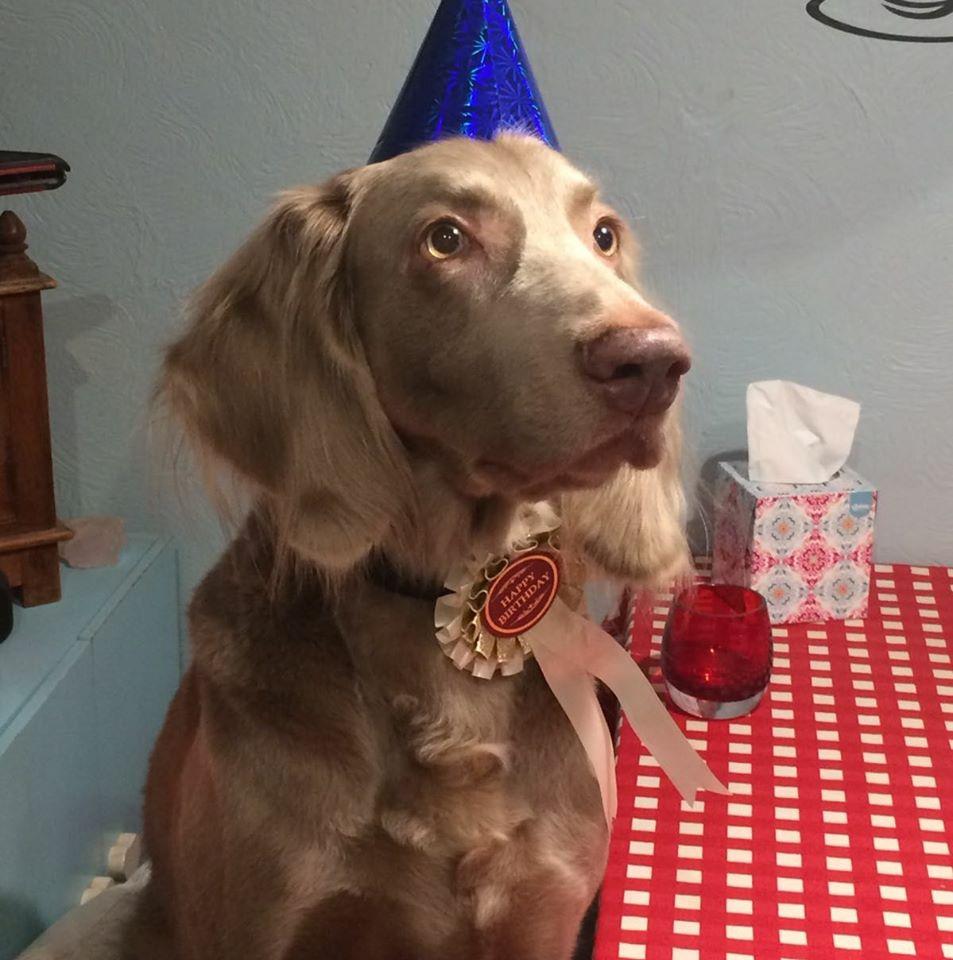 Happy 9th Birthday Kodi!