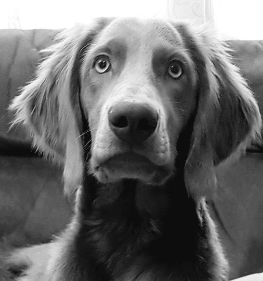 Advanced Trick Dog Title – Rosa