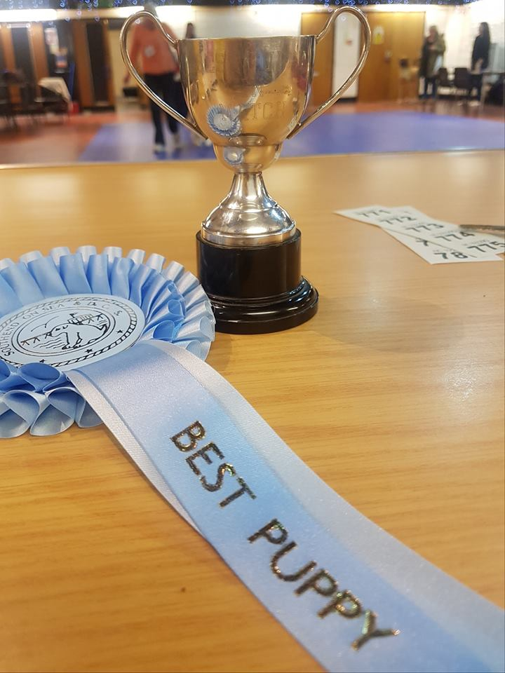 Rosa – Best Puppy & Qualified for Puppy of the year