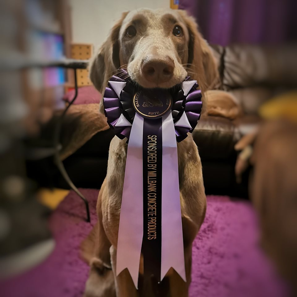 Halstead Obedience Show