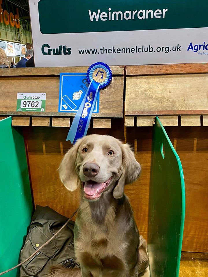 Astraios Be Still – CRUFTS 2020 – 2nd Place Yearling Dog