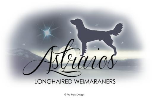 Astraios Longhaired Weimaraners