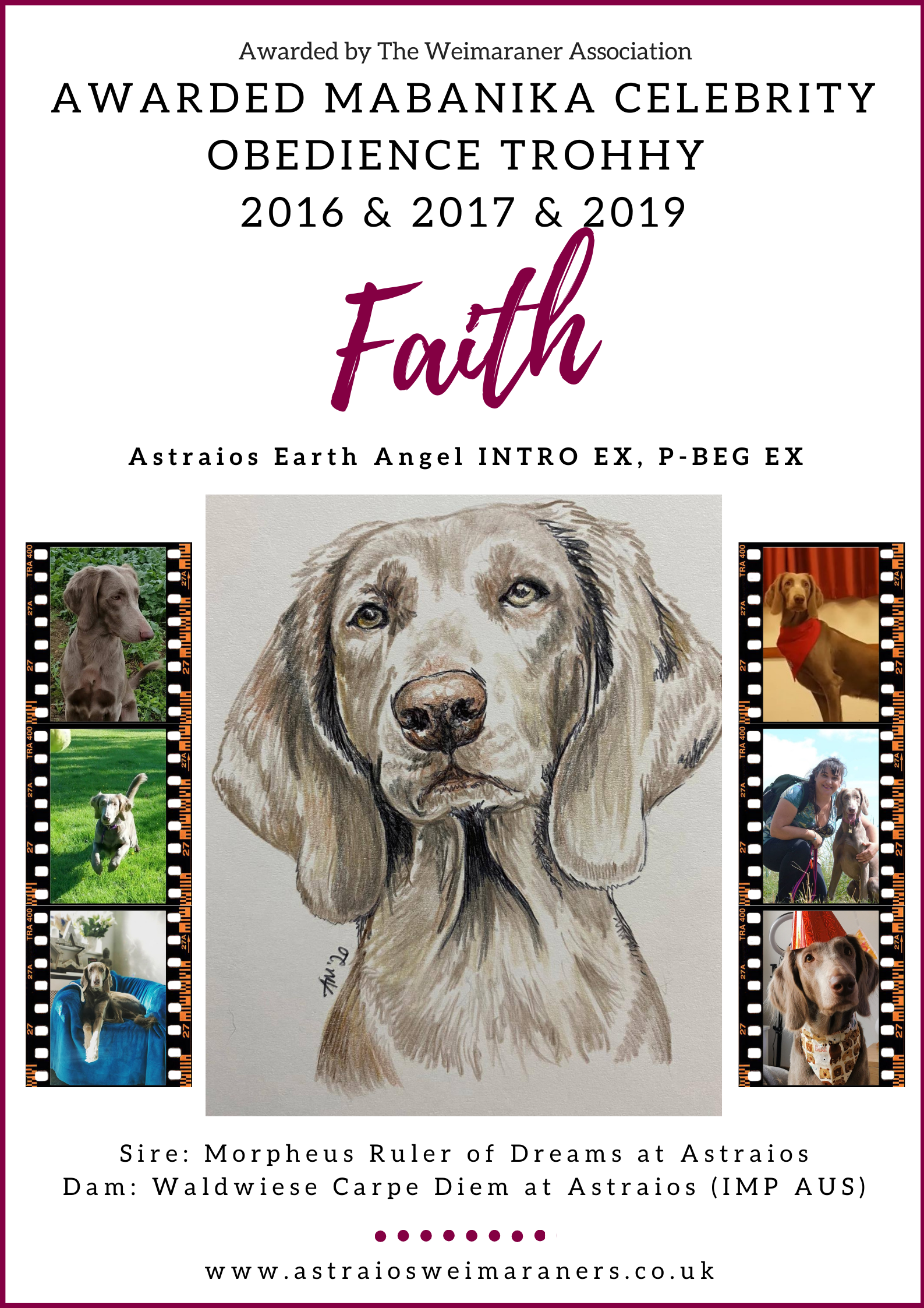 Mabanika Celebrity Obedience Trophy Winner 2019 – Faith (Astraios Earth Angel P-BEG EX)