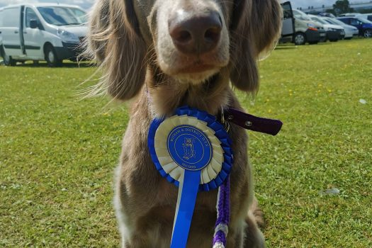 Witham & District DTS Obedience Show