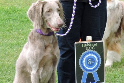 Halstead Dog Obedience Club Championship Obedience Show